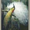 นกยูงคู่ขาวเขียวแสนสวย