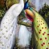 นกยูงคู่วิวน้ำตก 2