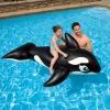 Intex แพยาง วาฬน้อย