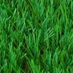 หญ้าเทียมสนามเด็กเล่น SG-40