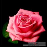 ครอสติสคริสตัล รูปดอกไม้