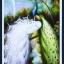 นกยูงคู่วิวน้ำตก 3 thumbnail 1