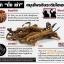 INFINEEN ผลิตภัณฑ์บำรุงร่างกาย ต้านอนุมูลอิสระ 6,500 ORAC thumbnail 7
