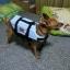 เสื้อชูชีพสุนัข Size L thumbnail 2