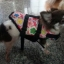 เสื้อชูชีพสุนัข Size L thumbnail 3